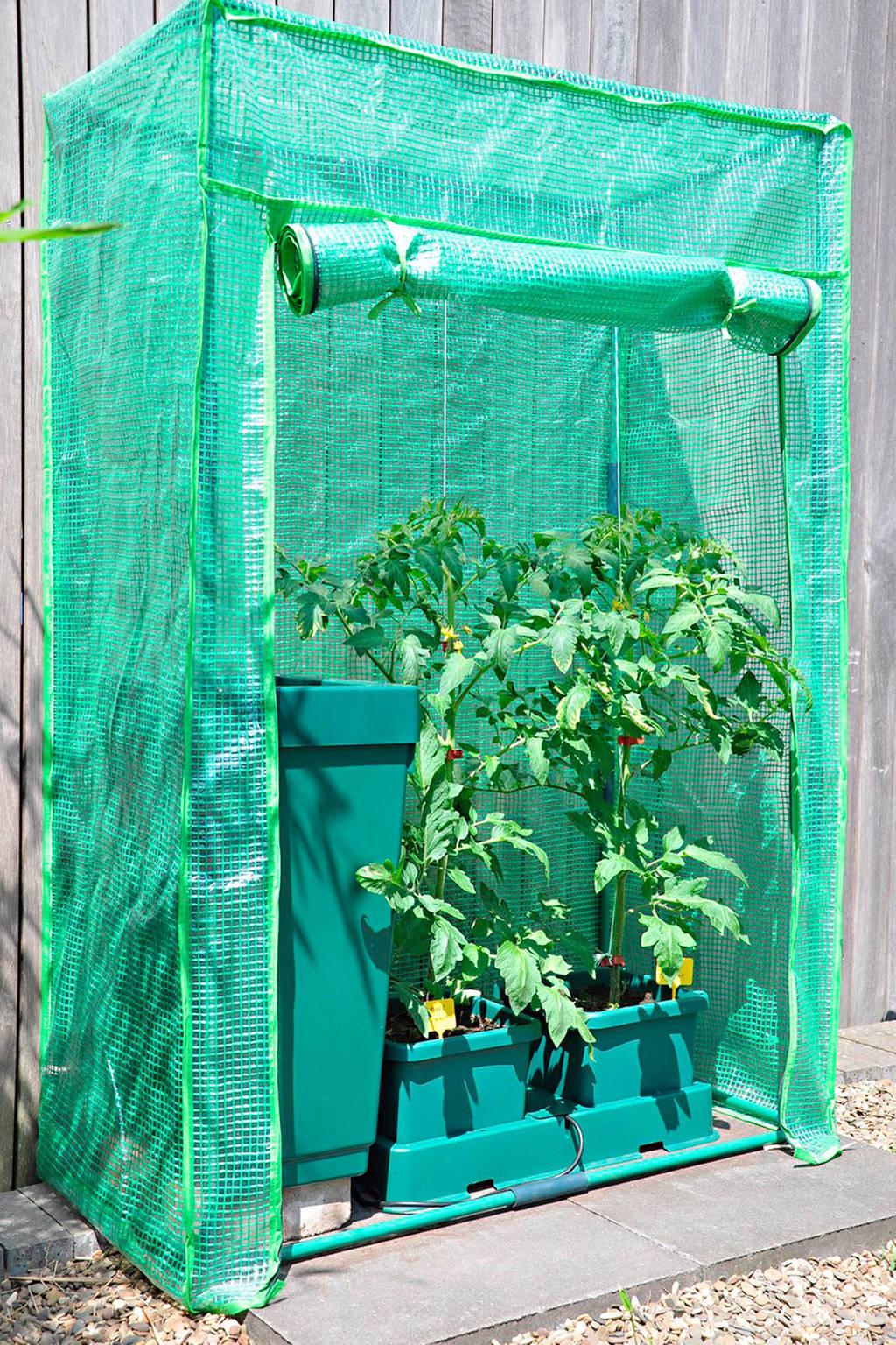 Royal Well foliekas Roma Tomato, Groen