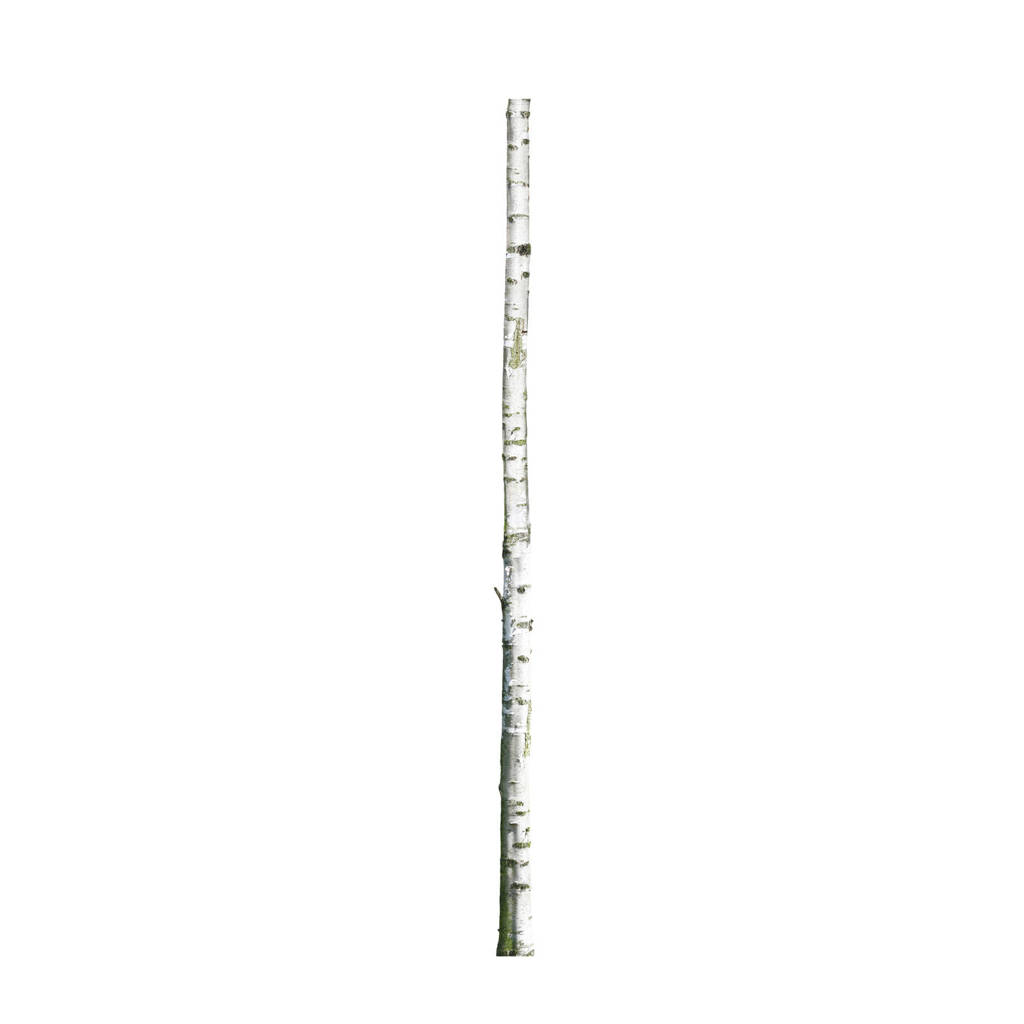 KEK Amsterdam muursticker Home Tree 2 (8x260 cm), Multi