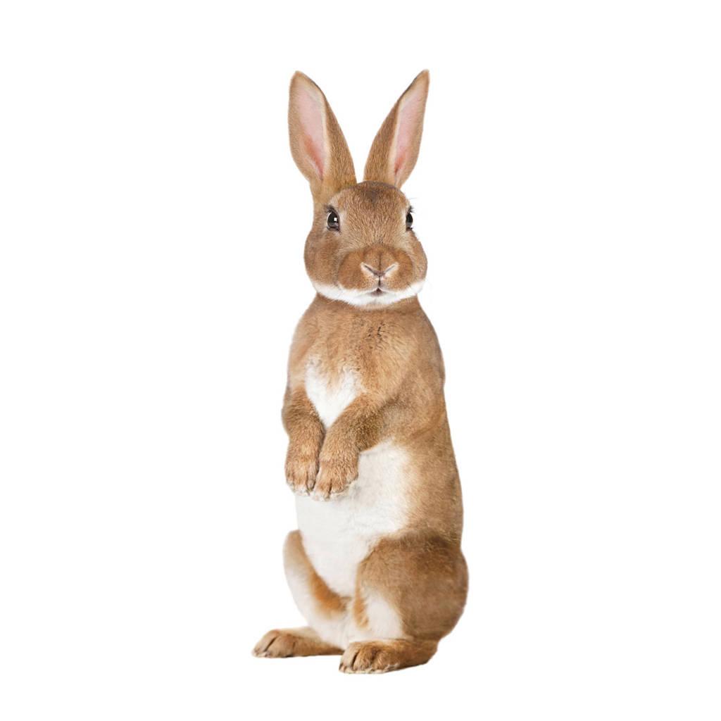 KEK Amsterdam muursticker konijn (12x32 cm)  ( cm), Multi