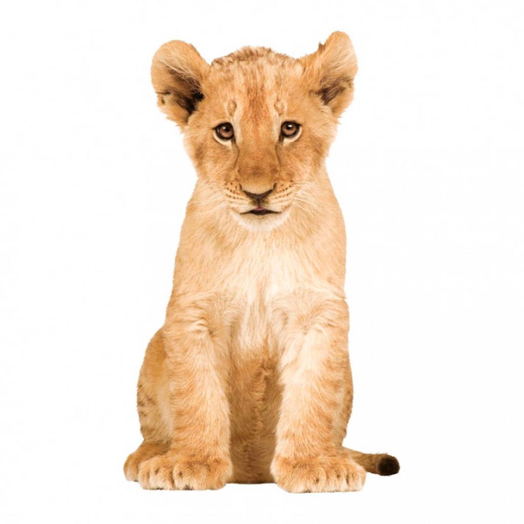 KEK Amsterdam muursticker Safari Friends leeuw (70x115 cm), Multi