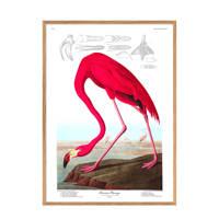 The Dybdahl Co poster American Flamingo  (40x30 cm)