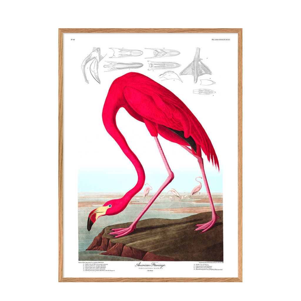 The Dybdahl Co wanddecoratie American Flamingo (30x40 cm)