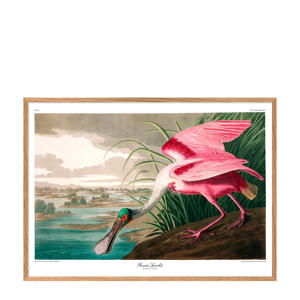 wanddecoratie Roseate Spoonbill (50x70 cm)