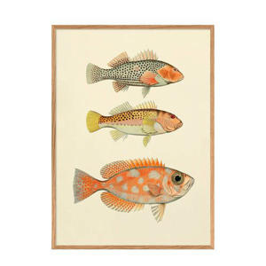 wanddecoratie Fishes (30x40 cm)