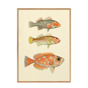 wanddecoratie Fishes (70x100 cm)