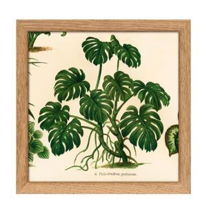poster Mini Botanical Palmarum+ The Plantae Collection (15x15 cm)  (15x15 cm cm)