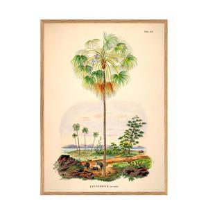 wanddecoratie Livistona Inermis (50x70 cm)