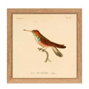 poster Mini Hummingbirds (15x15 cm)  (15x15 cm cm)