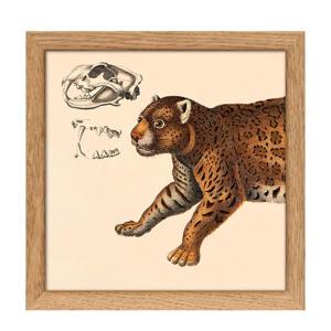 poster Mini Half Animals (15x15 cm)  (15x15 cm cm)