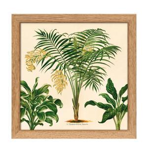 poster Mini Botanical Palmarum+ The Plantae Collection   (15x15 cm)