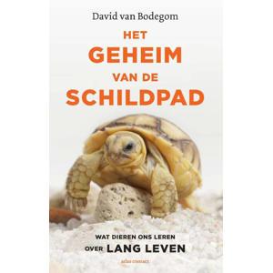 Het geheim van de schildpad - David van Bodegom