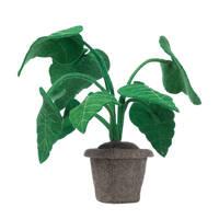 Kidsdepot Plant Alocasia, Groen