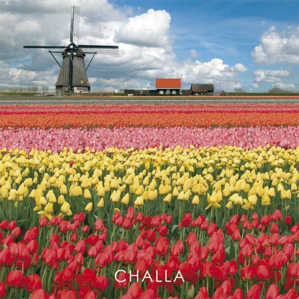I love books: I love tulips - B-J Challa