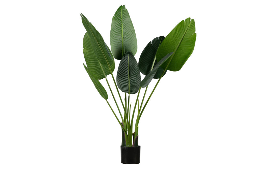 Woood kunstplant  Strelitzia, 108