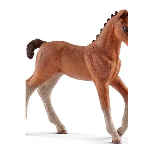 Horse Club Hannover veulen kopen