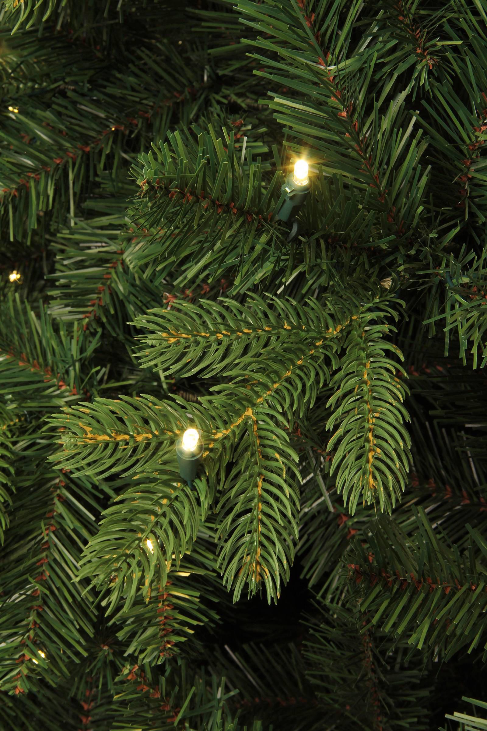 Black Box verlichte kerstboom Milton (h215 x ø127 cm) | wehkamp