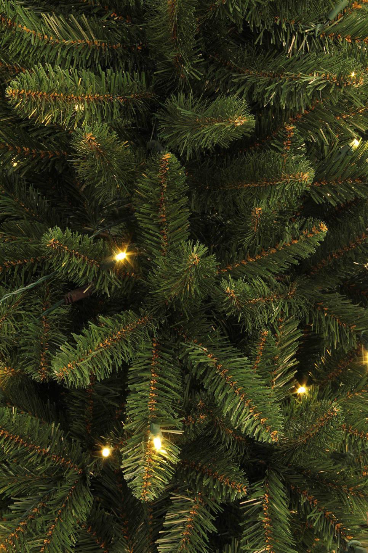 Black Box verlichte kerstboom Danfield (h215 x ø107 cm)   wehkamp