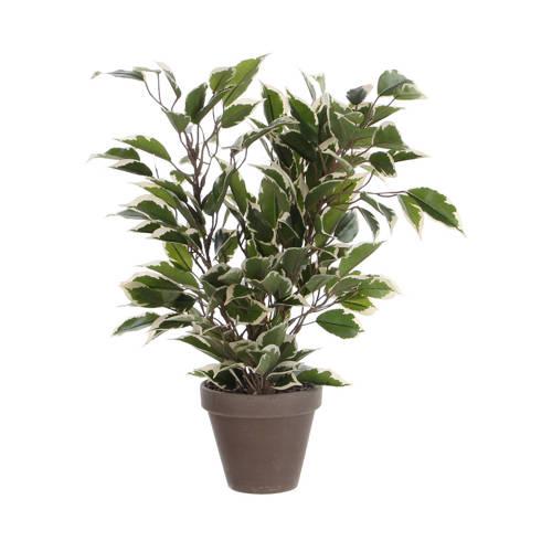 Mica kunstplant Ficus (h40 cm) kopen