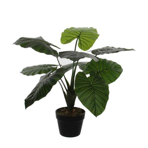 Mica kunstplant Taro (h60 cm) kopen