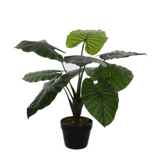 kunstplant Taro (h60 cm)