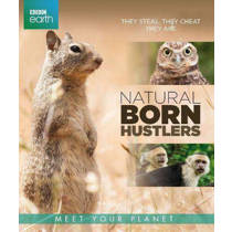BBC earth - Natural born hustlers (Blu-ray)