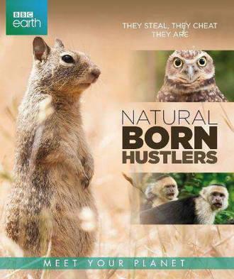 BBC earth - Natural born hustlers (Blu-ray)