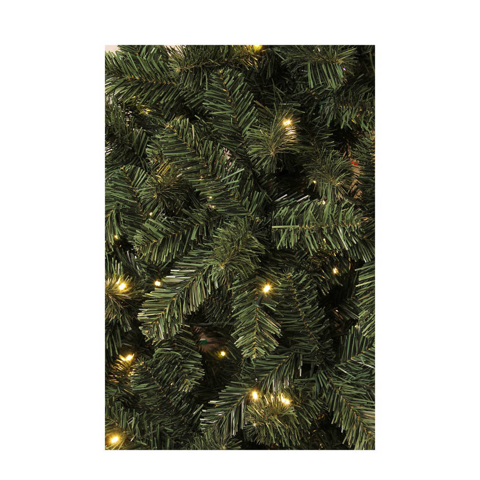 Black Box verlichte kerstboom Canmore (h185 x ø115 cm) | wehkamp