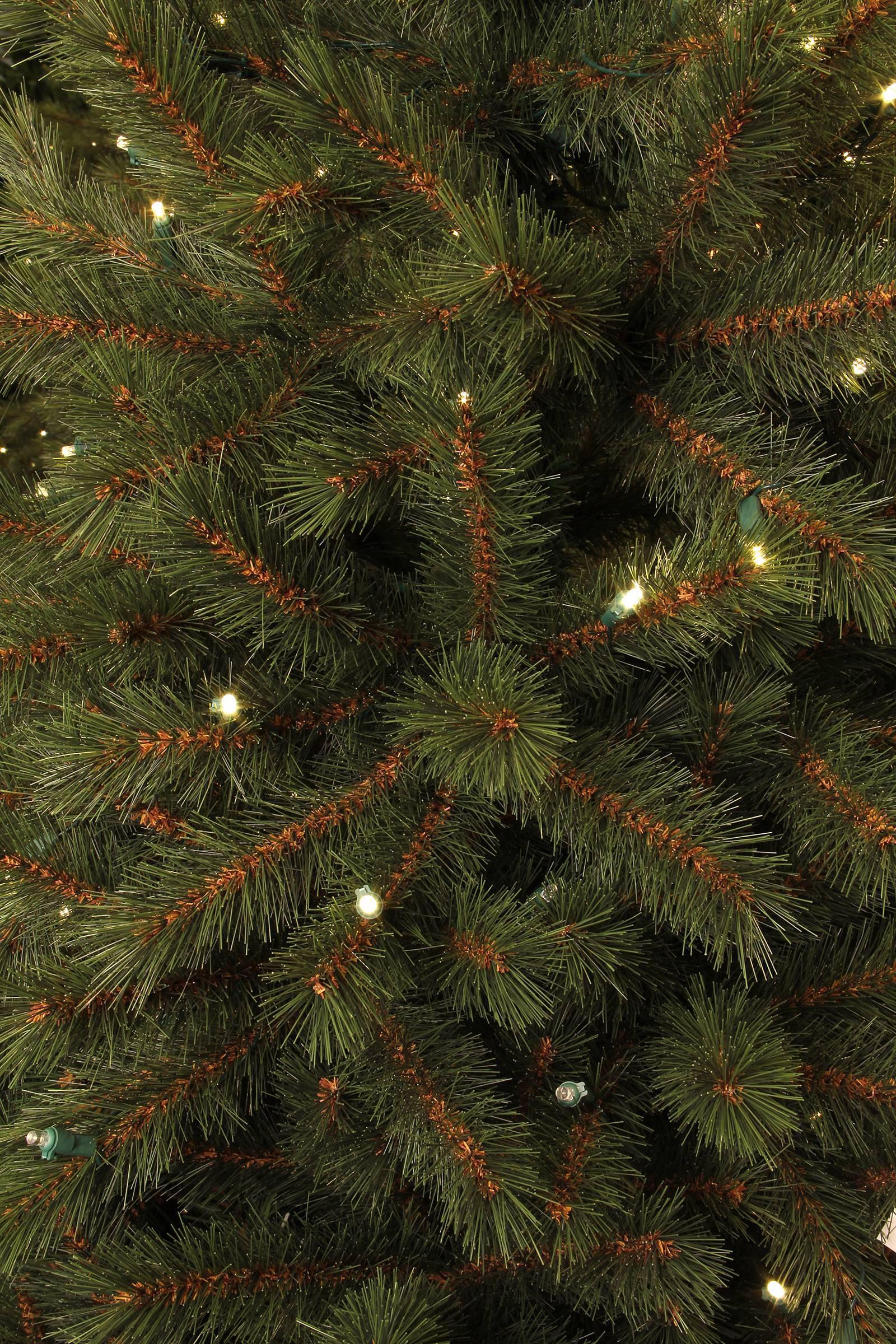 Black Box verlichte kerstboom Kingston (h230 x ø125 cm) | wehkamp