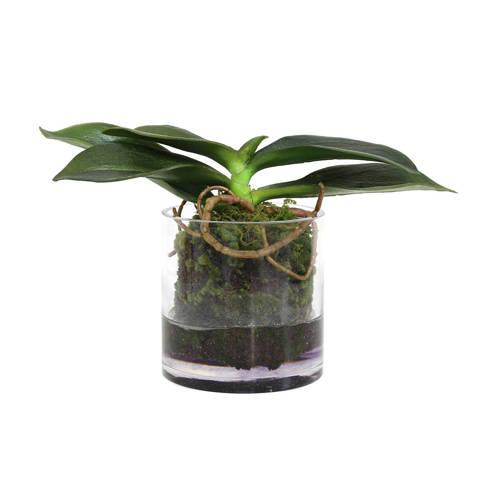 HKliving kunstplant orchidee kopen