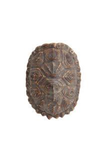 HKliving schildpadden schild (imitatie)