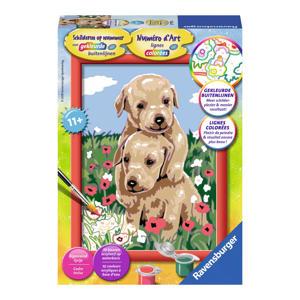 Schilderen op nummer - knuffelende puppies