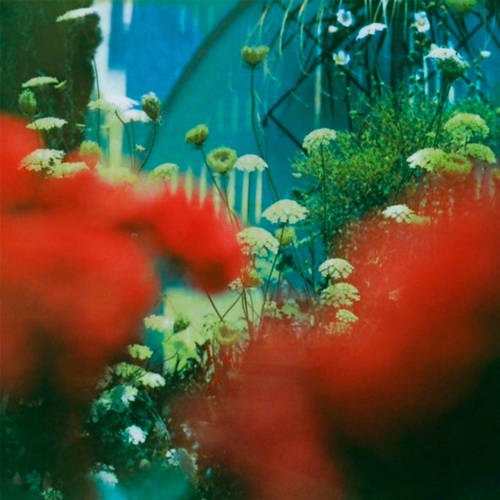 Pulled Apart By Horses - The Haze (CD) kopen